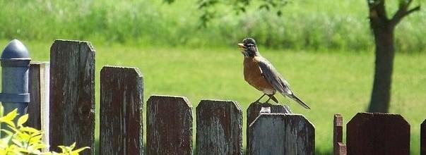 backyard birding garden