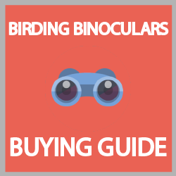 best bird watching binoculars