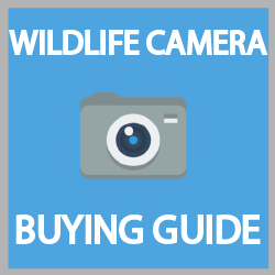 best wildlife camera
