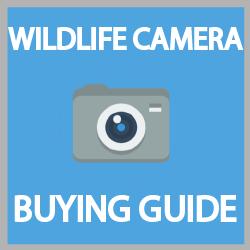 best wildlife camera