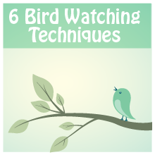 bird_watching_banner