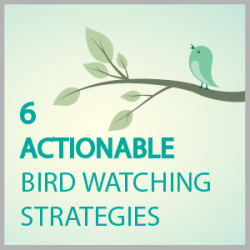 bird_watching_strategies
