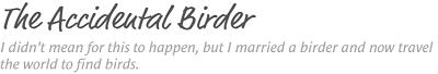 accidental birder