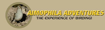 aimophila adventures