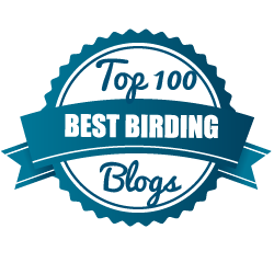 Top 100 Best Birding Blogs that Dominate the Web