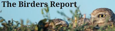 birdersreport